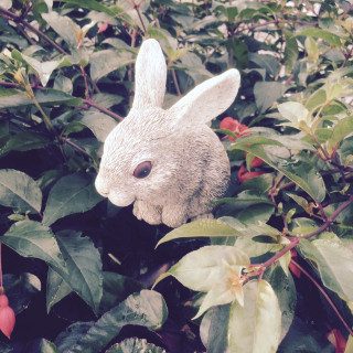 280730_rabbit.png