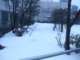 snowy_1.jpg