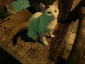 コザ猫(一)