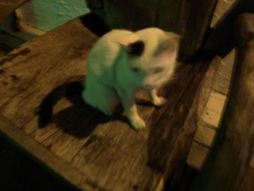 コザ猫(二)