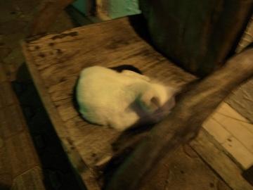 コザ猫(三)