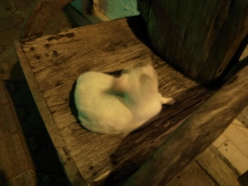 コザ猫(四)