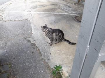 250913_cat1.jpg