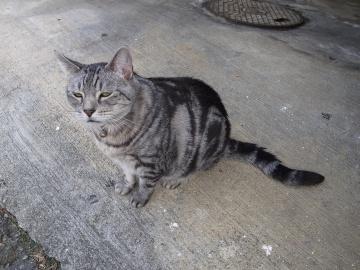 250913_cat2.jpg