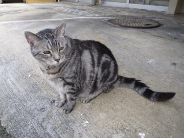 250913_cat3.jpg
