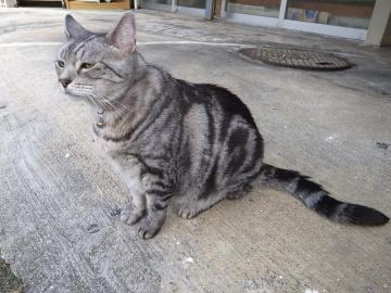 250913_cat4.jpg
