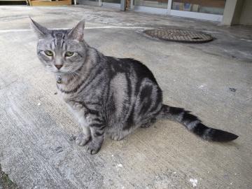 250913_cat6.jpg